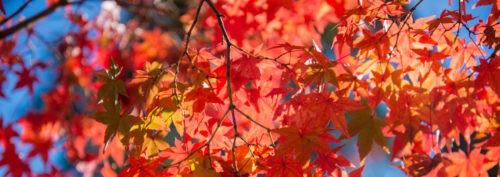 Autumn Aspirations Newsletter 2016